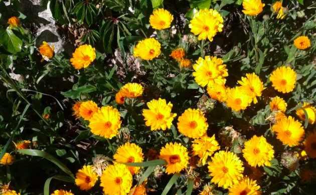 Ser la flor en un simple acto de ser