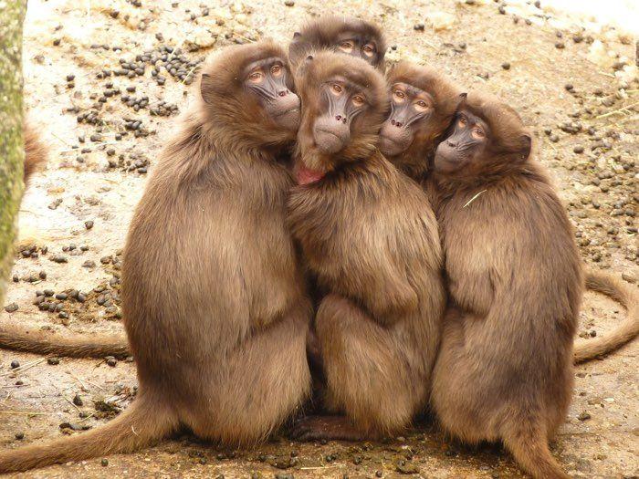 Muy mono entorno familiar